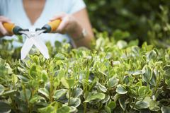Woman Trimming Hedge - stock photo