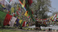 Prayer Flags and Bodhi Tree - Lumbini Stock Footage