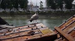 Bird in the harbor in Trouville, France Stock Footage