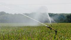 Agricultural Sprinkler Watering Cornfield - stock photo