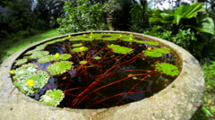 Pond with aquatic plants in tropical garden. Time lapse - stock footage