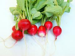 Vegetables radish Stock Photos