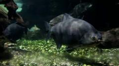 Aquarium sea life in Dusseldorf aquazoo Stock Footage