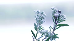Bee Roosts on Beautiful White Wild Flowers Stock Footage