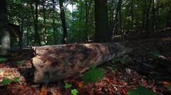 Big old tree trunk lies in the forest Stock Footage