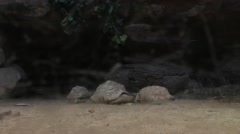 Tortoises at the Dusseldorf Aquazoo Stock Footage