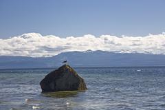 Gull on Rock in Ocean, Cortes Island, British Columbia, Canada Stock Photos
