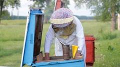 Beekeeper working in his apiary Stock Footage