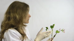 woman  watch buckwheat sprout in chemistry test tube flask - stock footage