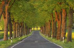 Tree-Lined Country Road, Mecklenburg-Vorpommern, Germany - stock photo