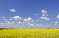 Canola Field at Springtime, Mecklenburg-Vorpommern, Germany - stock photo