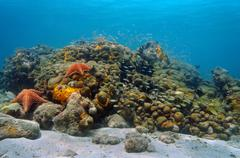 underwater caribbean coral reef and shoal of fish - stock photo
