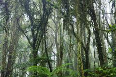 Cloud Forest, Santa Elena, Costa Rica Stock Photos