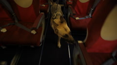 Security officer with dog checked the cabin Stock Footage