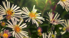 Wild Flowers - Close Up Stock Footage