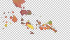 Autumn Leaves Spurt - 07 - Alpha Channel Stock Footage
