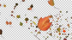 Autumn Leaves Spurt - 05 - Alpha Channel - stock footage