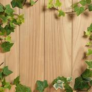 An ivy plant on a table of hardwood Stock Photos