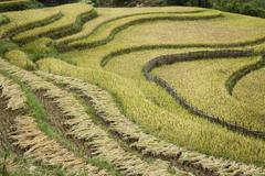 Rice Fields, Sa Pa, Lao Cai Province, Vietnam Stock Photos