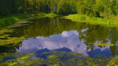 Summer nature forest lake landscape. Time-lapse. - stock footage
