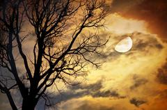 Dead tree against moon and clouds Stock Photos