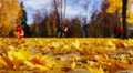 Autumn day in park, fallen leaves, strolling people, playing children. Footage