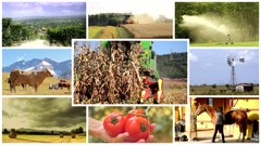 Stock Video Footage of agriculture montage, people and animals in farmland