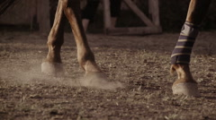 Horse wearing leg bandages Stock Footage