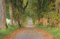 Tree-Lined Path, Bavaria, Germany - stock photo
