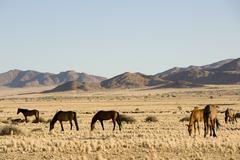 Horses, Aus, Karas Region, Namibia - stock photo