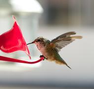 Humming bird on feeder - stock photo