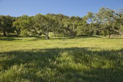 Stock Photo of Scenic View of Field and Trees, Paso Roble, California, USA