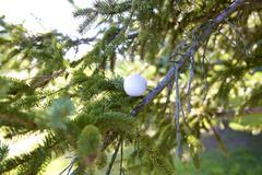 Golf Ball Stuck in Tree Stock Photos