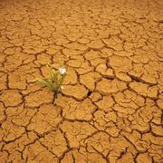 Wildflower Growing in Arid Cracked Earth Stock Photos
