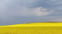 Time lapse with yellow rapeseed agriculture field, storm sky clouds Stock Footage