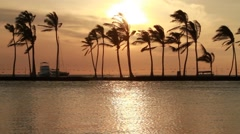 Sunset shot palm tree's in Hawaii Stock Footage