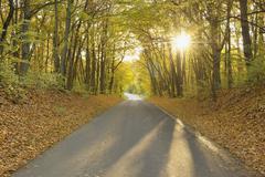 Road Through Gramschatzer Wald, Bavaria, Germany Stock Photos