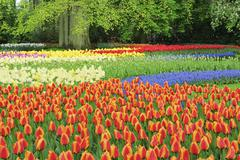 Keukenhof Gardens, Lisse, Holland Stock Photos