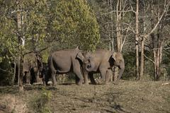 Elephants, Periyar Wildlife Reserve, Kerala, India - stock photo