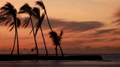 Palm Tree's blowing in the wind, A-Bay in Hawaii Stock Footage
