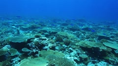 Tropical coral reef in the indian ocean Stock Footage
