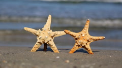 Two starfish on the beach - stock footage