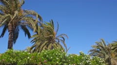 Palms and flowers of tropical sea resort swaying on the wind. Stock Footage