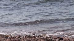 Stones in water slowmo 03 dahab Stock Footage