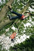 Arborist in Tree, Devon, England Stock Photos