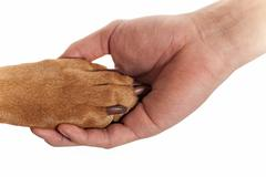 dog paw in human hand - stock photo