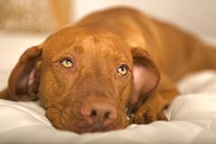 Dreamy dog Stock Photos