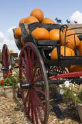 carriage loaded with pumpkins - stock photo