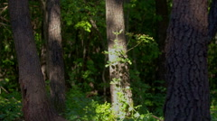 Moving forest shadows. DSLR, Raw quality time lapse. Stock Footage