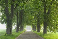 Road, Island of Ruegen, Mecklenburg, Mecklenburg-Vorpommern, Germany - stock photo